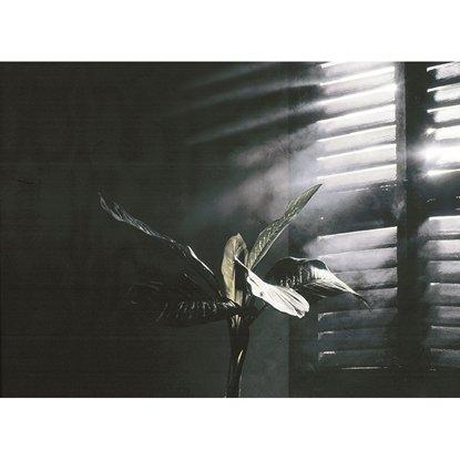 Afbeelding van Condor Smoky Mist Rook effect spuitbus 400ml art.nr. 62543